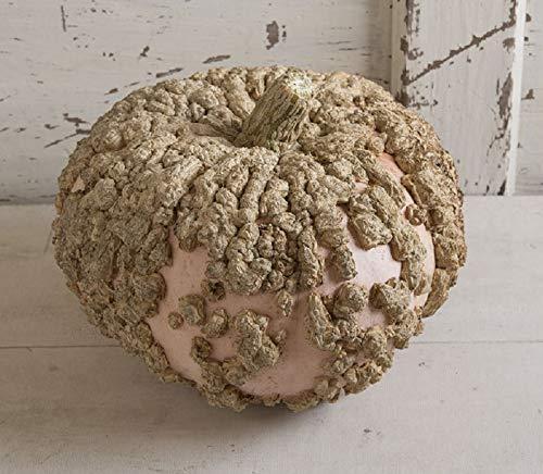 David's Garden Seeds Pumpkin Galeux Eysines