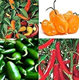 Liveseeds-CHILLI seeds Jalapeno, Hungarian , Habanero,Ring O FIRE semilla