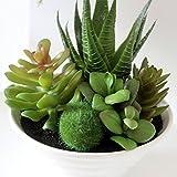 EgBert Mini Macetas Blancas Planta De Simulación Aloe Vera Inmortal Dedo Plantas En Maceta - 1