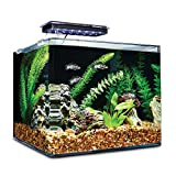 Petco Brand - Imagitarium Frameless Freshwater Aquarium Kit, 6.8 GAL