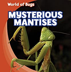 Raise A Praying Mantis Activities For Kids To Explore Life