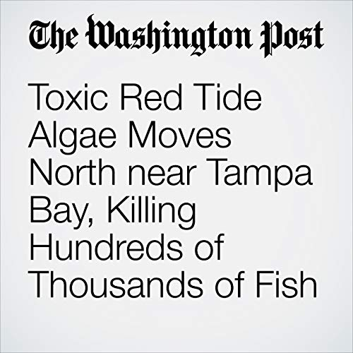Toxic Red Tide Algae Moves North near Tampa Bay, Killing Hundreds of Thousands of Fish copertina