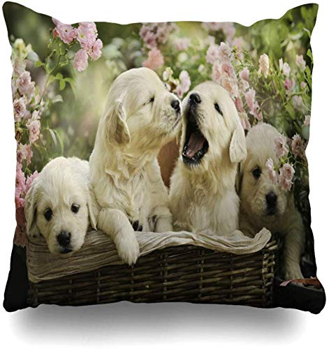Mesllings Gooi Kussen Covers Gelukkig Roze Bloemen Kleine Gouden Retriever Puppies Mand Labrador Zomer Wildlife Puppy Parks Rood Home Decor Kussen Cover Sofa Kussensloop, 45X45Cm