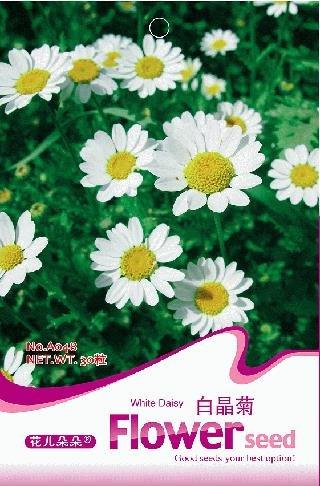 Blumensamen Bai Jingju Samen Mutterkraut Einfache 30 Teile/beutel Originalverpackung Hausgarten Bonsai Tree Decor Töpfe Pflanzgefäße