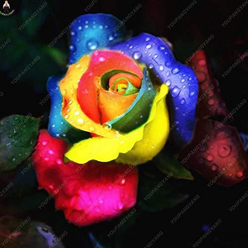 Generic Fresh 200 Stück Rosenblumensamen zum Pflanzen gemischt 11