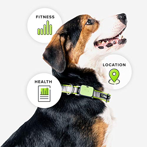 Whistle GO Explore - Ultimate Health & Location Tracker for Pets - Waterproof GPS Pet Tracker, Built-in Night Light, 20 Day Battery, Pet Fitness Tracker fits on Collar - Green