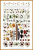 American Image Poster 24x36 Paper Spices and Culinary Herbs