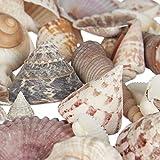 Relaxdays Muschel Deko Mix, Set mit Meeresschnecken, Dekomuscheln, echte Stranddeko zum Basteln, Badezimmer, 500 g, bunt - 8