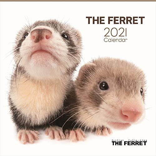 THE FERRET フェレット カレンダー 2021年 アーリスト ザドッグ ザ ドッグ カレンダーグッズ 壁掛け
