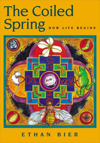 The Coiled Spring: How Life Begins
