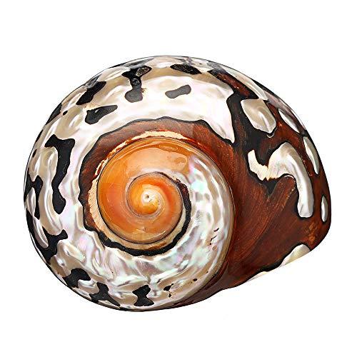 Vipithy 8-10cm turbante africano natural concha de mar coral concha caracol decoración del tanque de peces