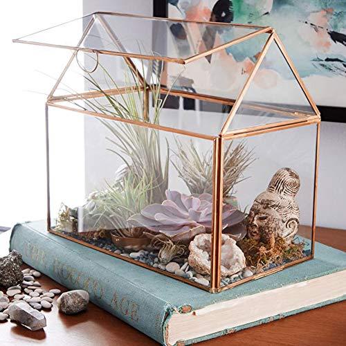 Liukouu Terrario de Vidrio geométrico suculento, terrario de Vidrio de Mesa Terrarios de Plantas Transparentes 10.2
