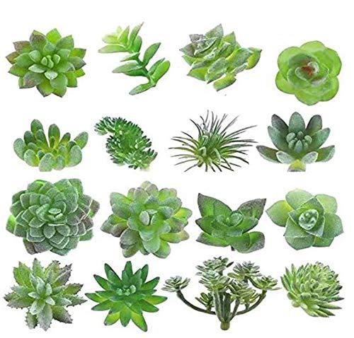 planta cactus fabricante MAXZONE
