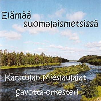 Elämää suomalaismetsissä