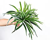 Lopkey 2pcs Artificial Silk Spider Plant Fake Artificial Flowers Wall Hanging Grass