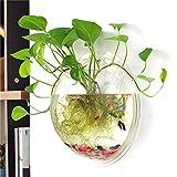 Fablcrew - Jarrón colgante de cristal transparente para plantas y flores, decoración de jardín, casa o boda