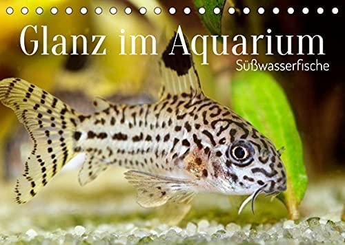 Glanz im Aquarium: Süßwasserfische (Tischkalender 2022 DIN A5 quer)