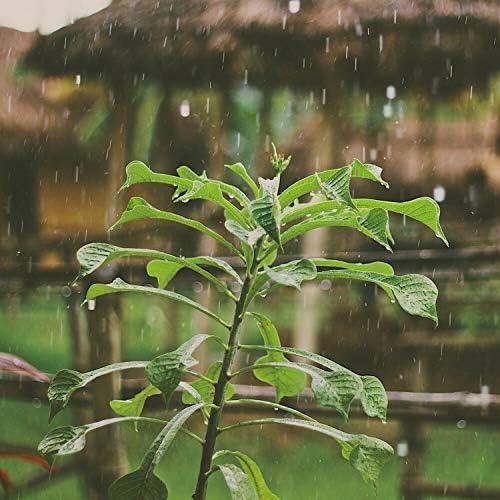 Rain Sounds, Regengeräusche & Sleep Sounds of Nature