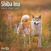 Bright Day Calendars 2021芝犬の壁カレンダー、12 x 12インチ、かわいい犬の子犬