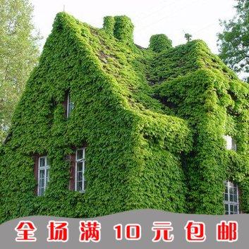 1bag = 100pcs Hot Sale JAPONAIS Graines de coriandre persil légumes Bonsai Tomate cerise Bio Graines Maison & Jardin
