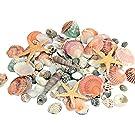 SEAJIAYI 120 PCS Sea Shells Mixed Beach Seashells 12 Kinds of Shells Colorful Seashells with Starfish for Home Decoration, DIY Crafts, Fish Tank and Vase Filler (Multi)-350g
