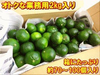 石垣島産シークワサー約2kg箱入り(約70〜100個入)
