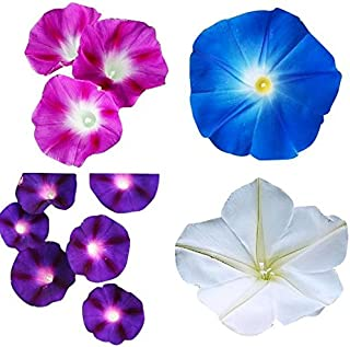 Mix of Blue, Purple, White, Rose Morning Blooming Vine Seeds