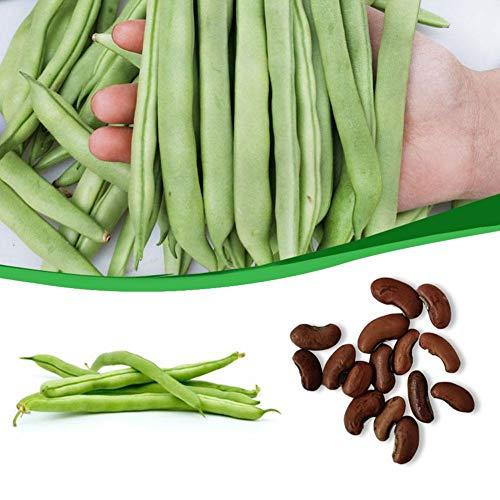 LIANA IRWIN 50 Gemüsesamen Bohnen Samen,gartengemüse Grüne Organische Buschbohnen Samen, Zum Kochen