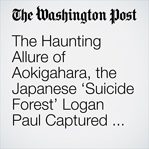 The Haunting Allure of Aokigahara, the Japanese 'Suicide Forest' Logan Paul Captured on Film copertina