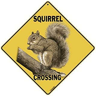 funny squirrel signs