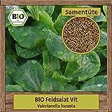BIO Feldsalat Samen winterhart Sorte VIT Salat Samen Gemüse Saatgut Wintersalat