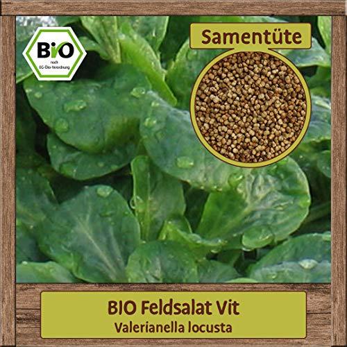 BIO Feldsalat Samen Sorte VIT Herbst- & Wintersalat Gemüsesamen Salat mehltautolerant & winterhart