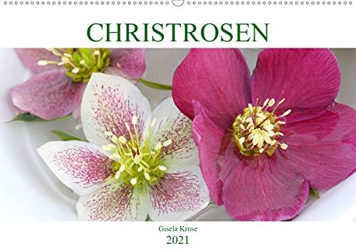 Christrosen (Wandkalender 2021 DIN A2 quer)
