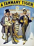 334744 A Tammany Tiger Fine Graphic Interior Design Decor Wall 16x12 Poster Print