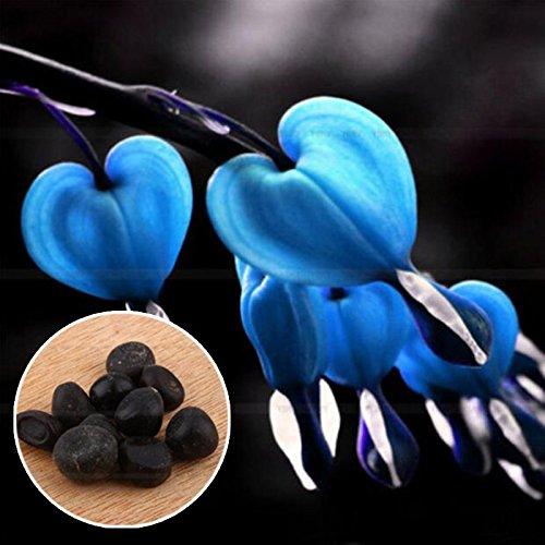 Auntwhale (10 Pcs) Bourse Pivoine Seed Blue