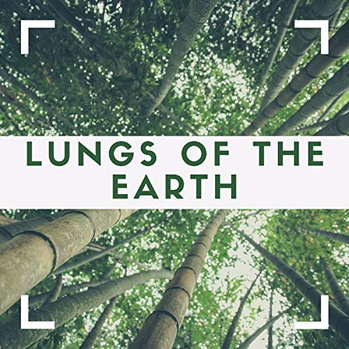 Forests Fall 2019 - Anthem for the Amazon, Tropical Rainforests Sounds