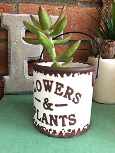 Homes on Trend Favore di cerimonia nuziale decorativo misero del vaso di fiore dell'erba del secchio di ceramica piccolo d'annata