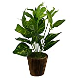 Artificial money plant in wood Material: Others, Color: Green Package Contents: 1 x Artificial Money Plant in Wood Round Small Pot Item Size: 20 cm x 20 cm x 30 cm Round small pot