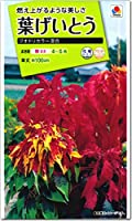 葉げいとう 種子 クオドリカラー 混合 0.6ml(育苗可能本数:およそ400本) Celosia セロシア