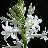 Charm4you Balcón Primavera Flores,Semilla Floral de jardín al Aire Libre-Mix Color A_150 cápsulas,perenne Resistente Semillas