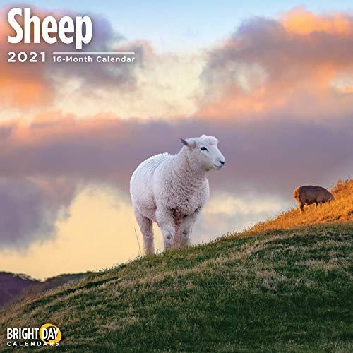 2021 Sheep Wall Calendar by Bright Day, 12 x 12 Inch, Cute Farm Animal