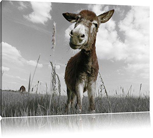 Pixxprint Esel im Feld als Leinwandbild | Größe: 80x60 cm | Wandbild | Kunstdruck | fertig bespannt