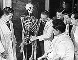 Teacher explaining the human skeleton system to students