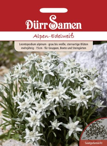 Dürr-Samen Alpen-Edelweiß