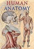 Human Anatomy (TAJ Big Books)