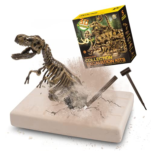 MUSCCCM Kit di scavi per dinosauri, kit di scavo fossili di scheletro Dino Modello di dinosauro realistico Giocattoli educativi Regalo per bambini Ragazzi Ragazze