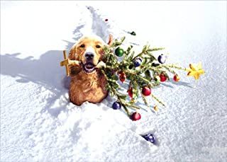 Dog With Tree In Snow - Avanti Funny Box of 10 Christmas Cards