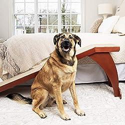 Beste Hunderampen für Autos, Betten und Treppen