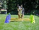 FitPAWS Canine Gym Agility Kit Accessoire Education pour Chien