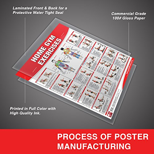 Home Gym Exercises Laminated Poster/Chart: Home Gym Chart, Home Gym Weight Lifting Routine, Weight Stack Gym Chart, BodySolid Gym Poster, ... Selectorized Gym Poster, Exercises poster
